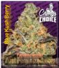 Paradise Chong's Choice Blue Kush Berry Fem 5